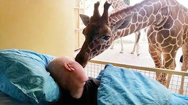 girafada.jpg