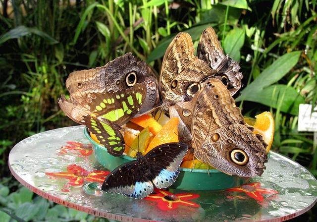 Tropische Schmetterlinge_Botanischer Garten.JPG