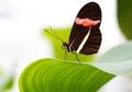 Tropische Schmetterlinge_Botanischer Garten_1.JPG