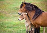 Roundup_Pferde.JPG