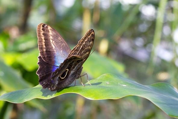 Naturgetreue Hinterglasbilder heimischer und exotischer Schmetterlinge.jpg