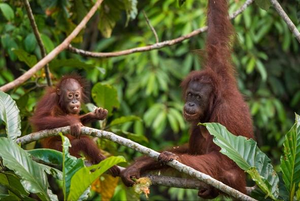 Leben im Dschungel.jpg