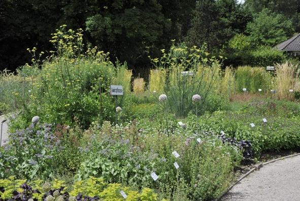 Sommerfest im Botanischen Garten.jpg