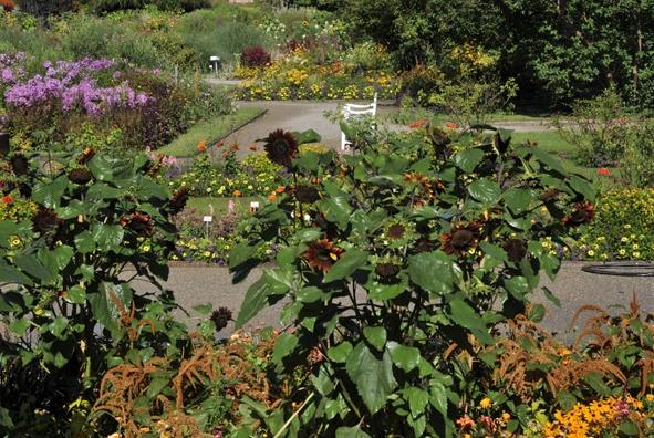 Sommerfest im Botanischen Garten_1.jpg