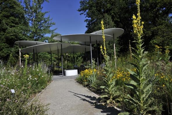 Sommerfest im Botanischen Garten_3.jpg