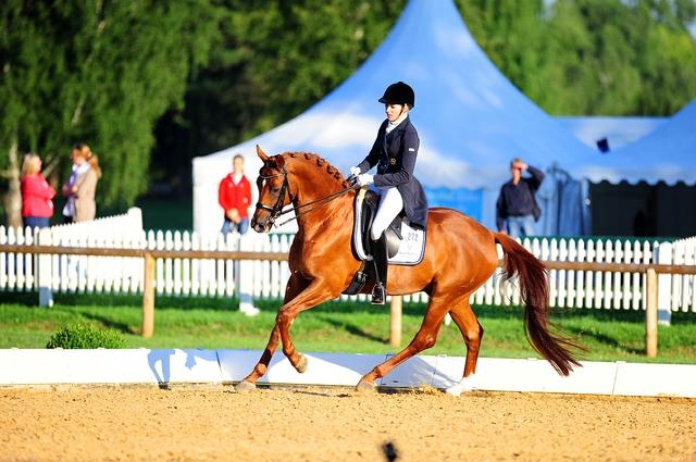 pferd inter.jpg