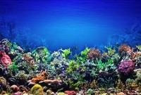 Meer Unterwasser Korallen.jpg